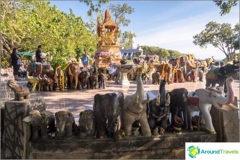 Sama elefanttilauma