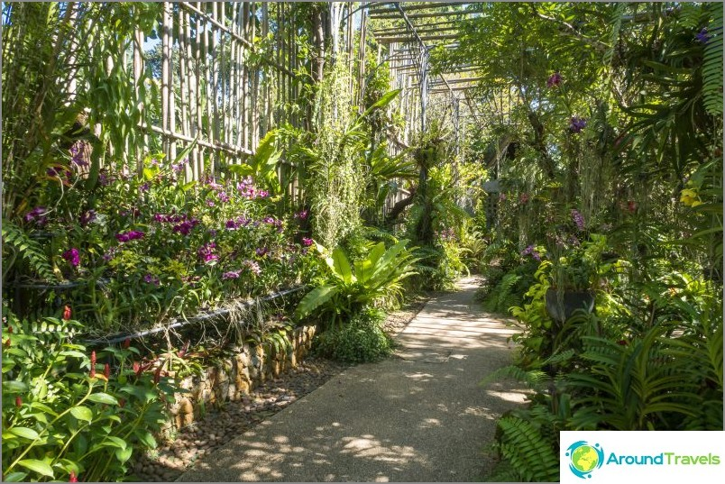 Phuketin kasvitieteellinen puutarha