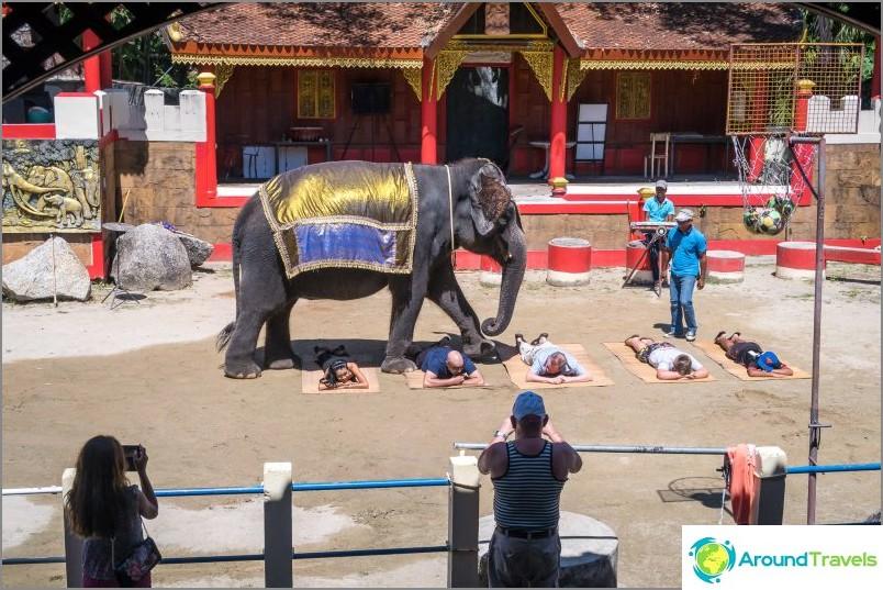 Elefantti-show