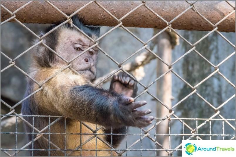 Khao Kheon eläintarha Pattayassa - Thaimaan paras