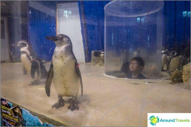 Penguin Aviary