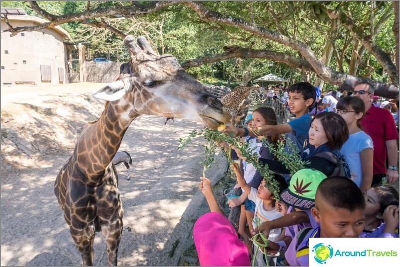 Khao Kheo Ota yhteyttä eläintarhaan