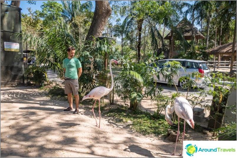 Khao Kheon eläintarha Pattayassa