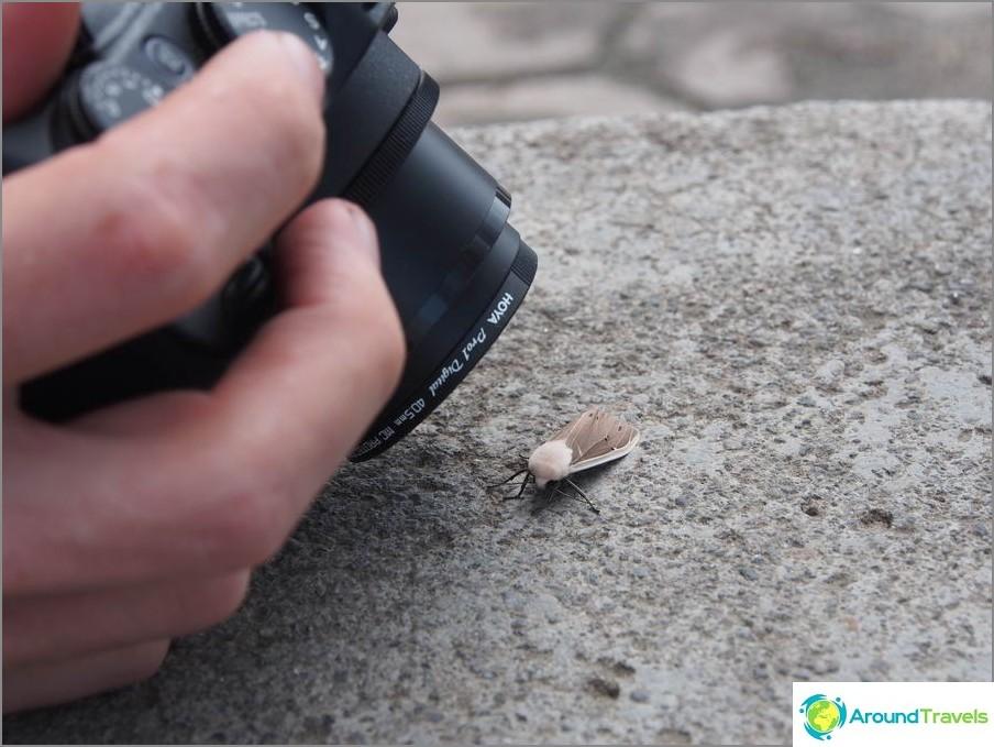 Retki entomologien kanssa - kamera on jatkuvasti makro-tilassa