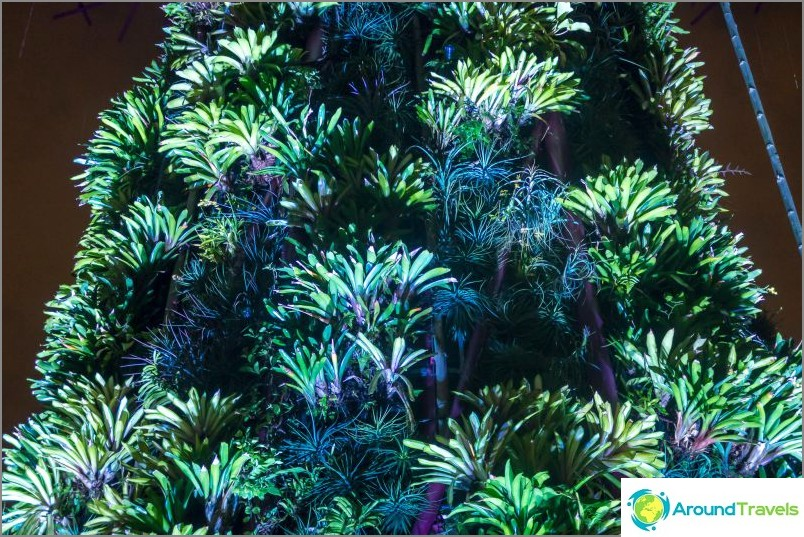 Supertree kasvit