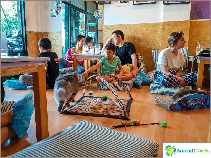 Catfosphere Cat Cafe в Чианг Май
