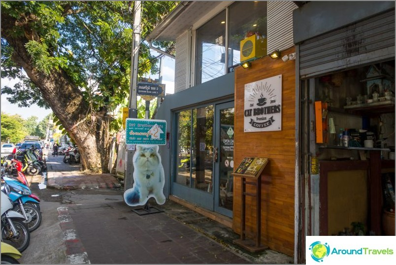Cat Brothers Cafe в Чианг Май