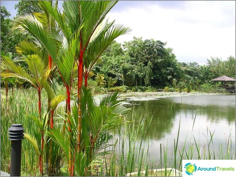 Сингапурска ботаническа градина. commons.wikimedia / Genleorus