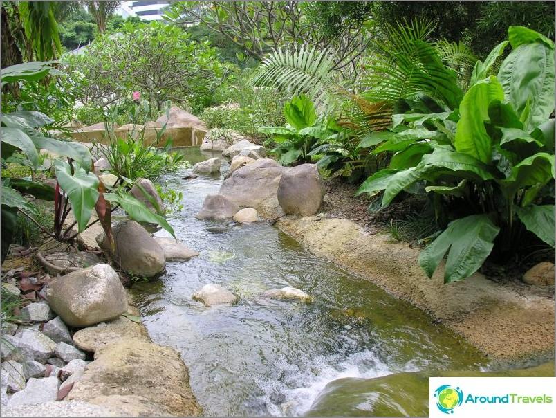 Сарака Крийк в Ботаническата градина. commons.wikimedia / Genleorus