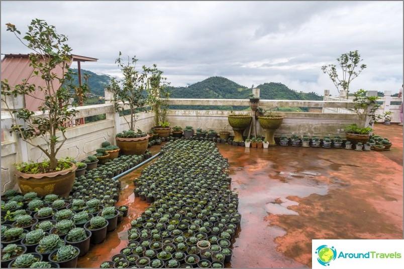 Kaktus puutarha ravintolan katolla