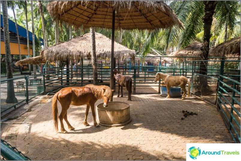 Nong Noochin trooppinen puisto Pattayassa - tärkein nähtävyys
