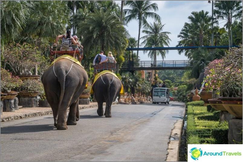 Voit ajaa norsuilla alueella