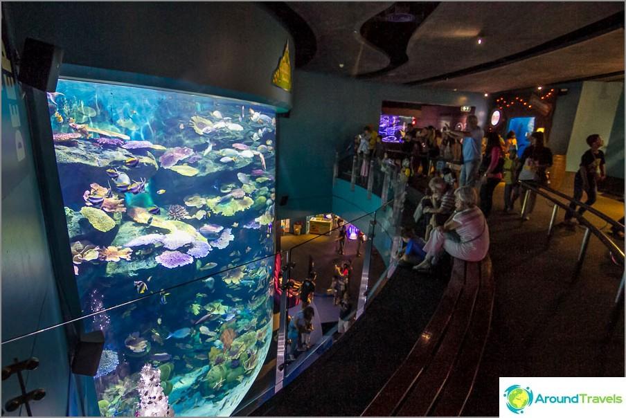 Yksi valtavista akvaarioista, joissa on värikkäitä kaloja