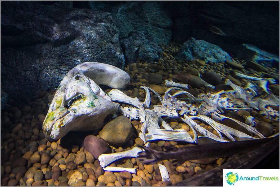 Oudot asennukset yhteen akvaarioista
