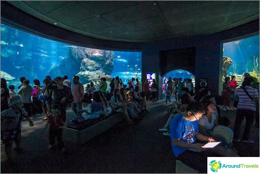 Akvaario, joka päättyy tunneliin