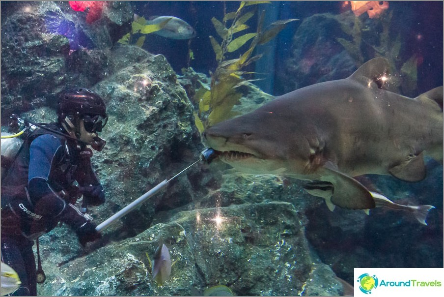 Hain ruokinta Bangkokin akvaariossa