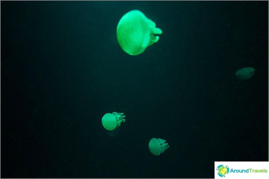 Valaistu meduusat chilloutissa