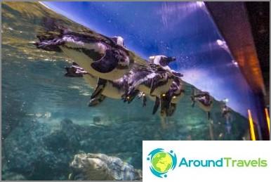 Bangkokin Oceanarium Sea Life Ocean World - kalojen ja haiden ruokinta