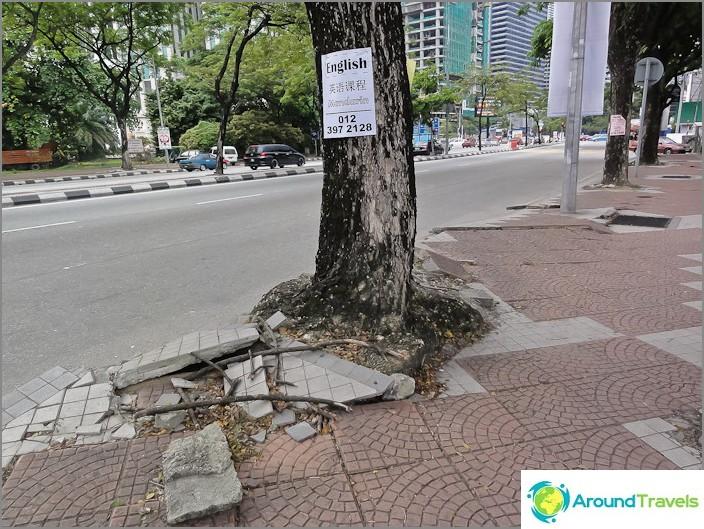 تمزق جذور الأشجار من أجل الحرية