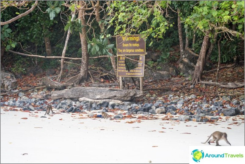 Monkey Beach - Apinaparatiisi Phi Phi Donissa
