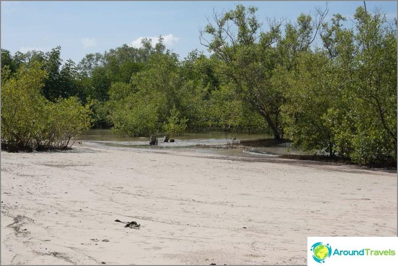 Mangrovet Ban Banin oikealla puolella