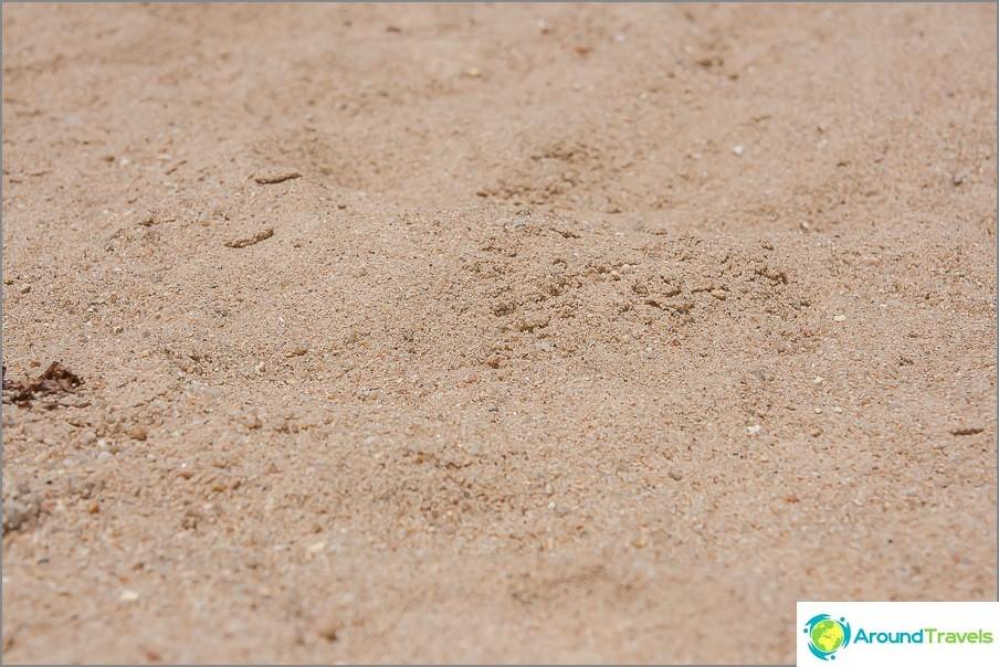 ranta-koralli-lahti-koralli-lahti-koralli-lahti-koh-Samui-12