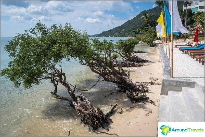 Oikea näkymä - mangroveja rannalla