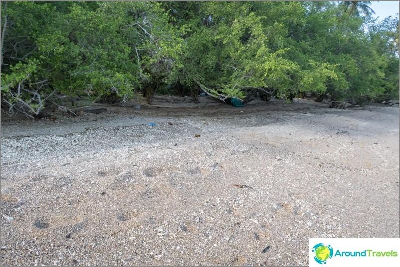 При отлив водата достига до дърветата