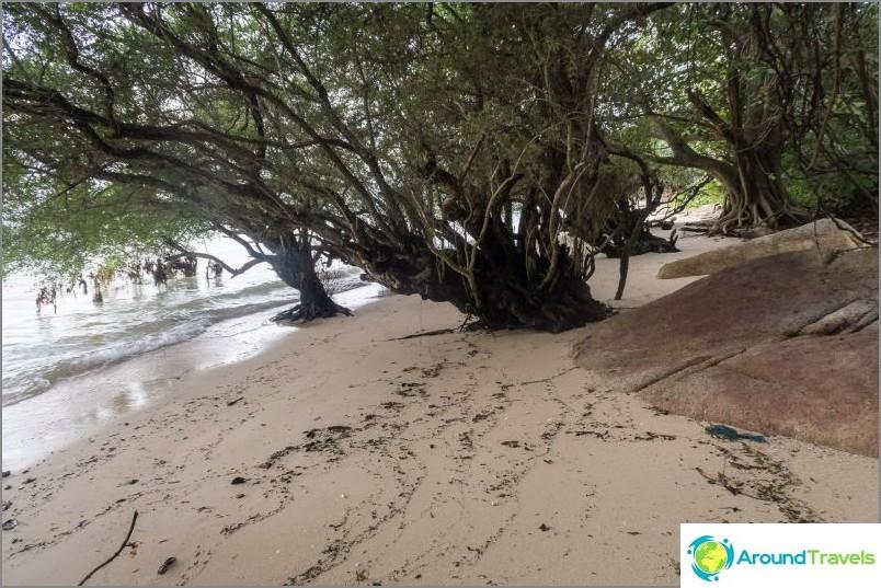 Тук-там трябва да минете през гъсталаците на мангровите гори