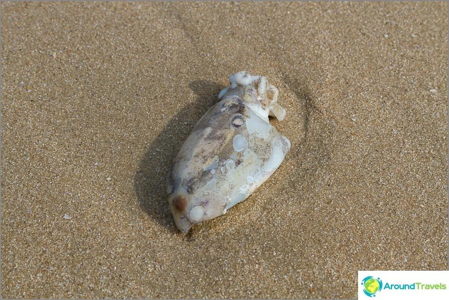 the-beach-sai-noi-sai-noi-beach-best-hua-hin-04