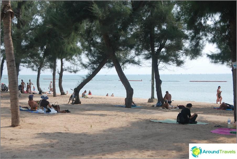 Un appezzamento di spiaggia con casuarines e senza file di lettini
