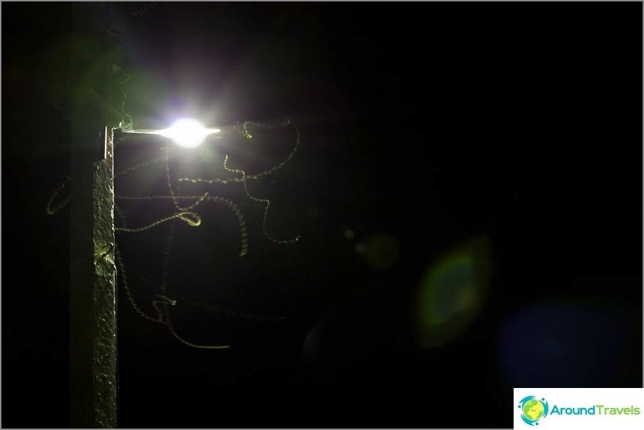 Öiset lentävät madot