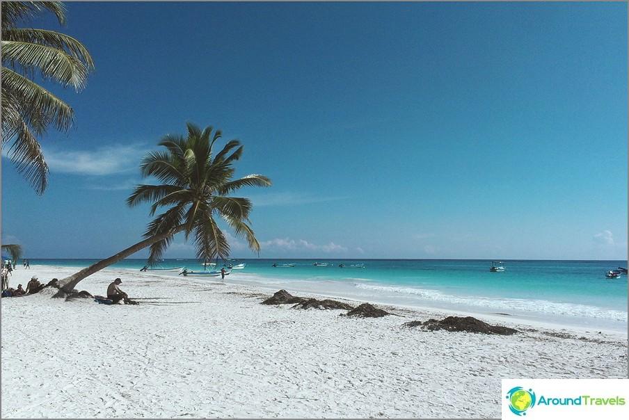 Palmuja meren rannalla, missä freelancer olisi ilman niitä =)