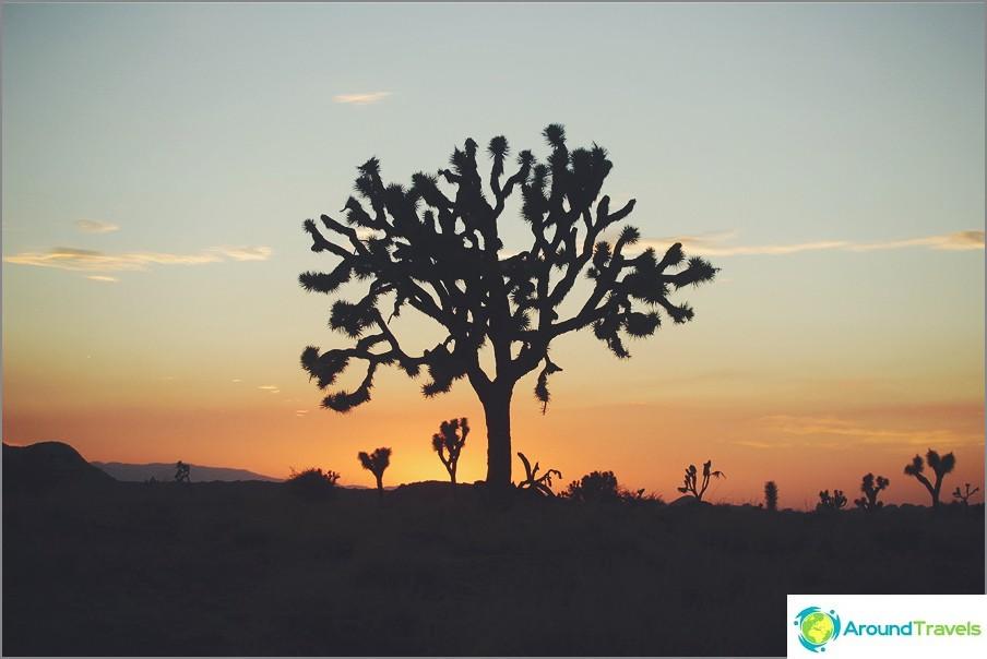 Joshua Tree, Yhdysvallat