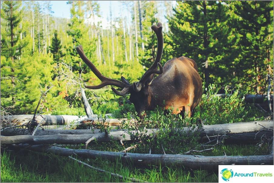 Yellowstonen kansallispuistossa, Yhdysvalloissa