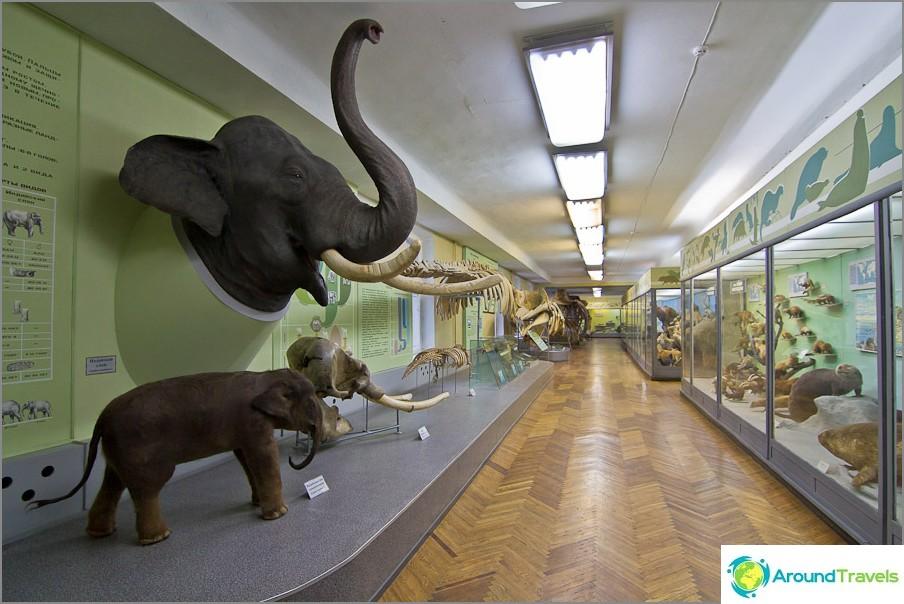 Naapurin eläintarha luovutti elefantin pään useita vuosia sitten.