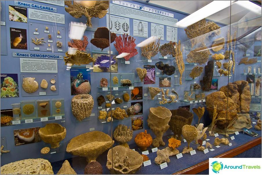Yksi museon värikkäimmistä osastoista