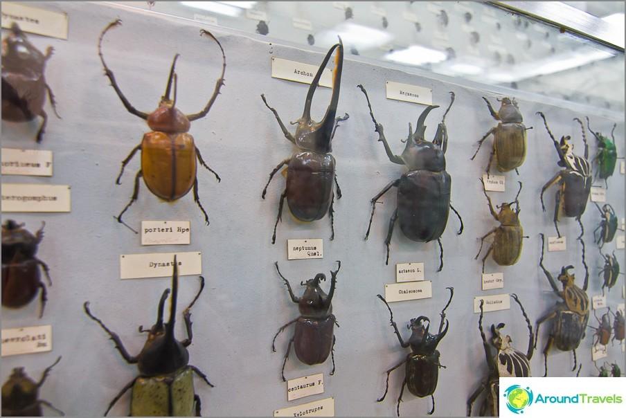 Hyönteisten kokoelma