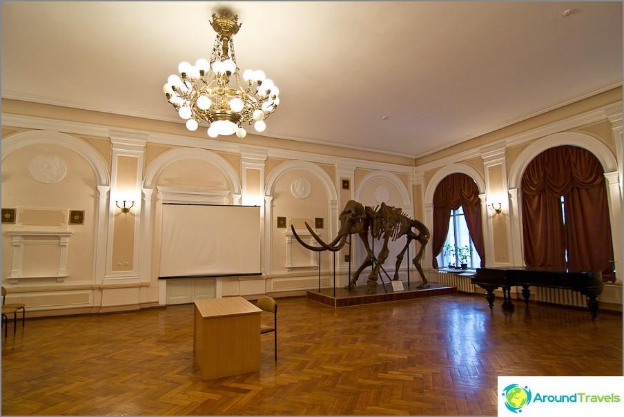 Yhteinen iltahuone mammutin kanssa nurkassa