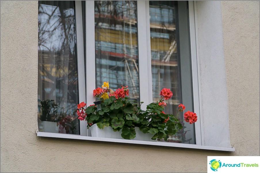 Kukkia ikkunalaudoilla on kaikkialla yleinen ilmiö