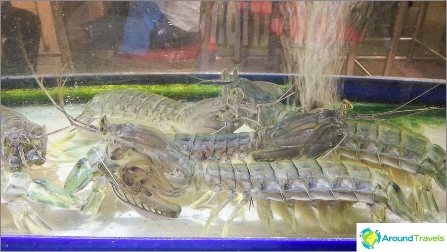Elävät hummerit uivat lähellä akvaarioissa