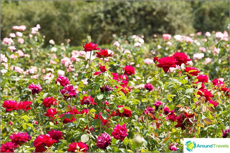 Ruusukirja puistossa Salgirka