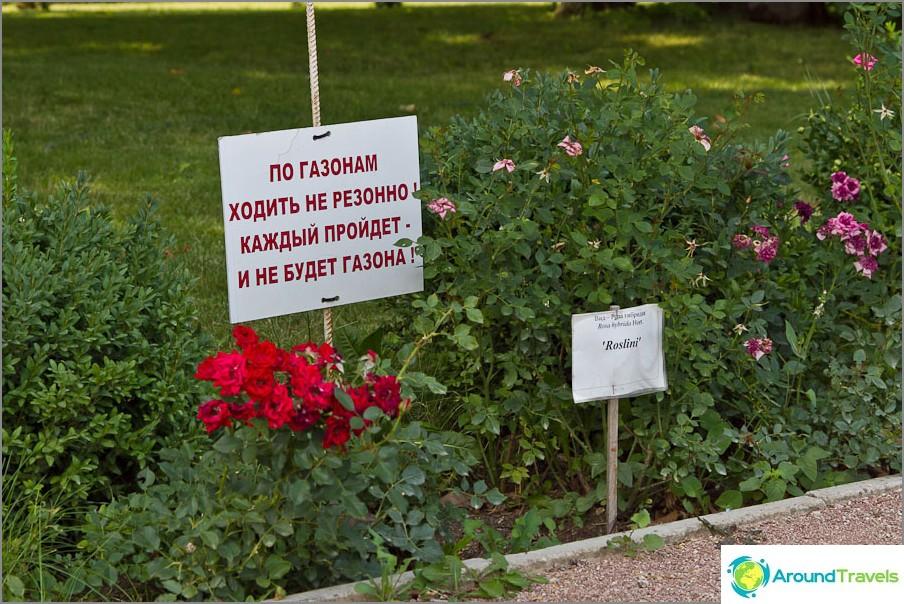 Hauska kirjoitus nurmikolle