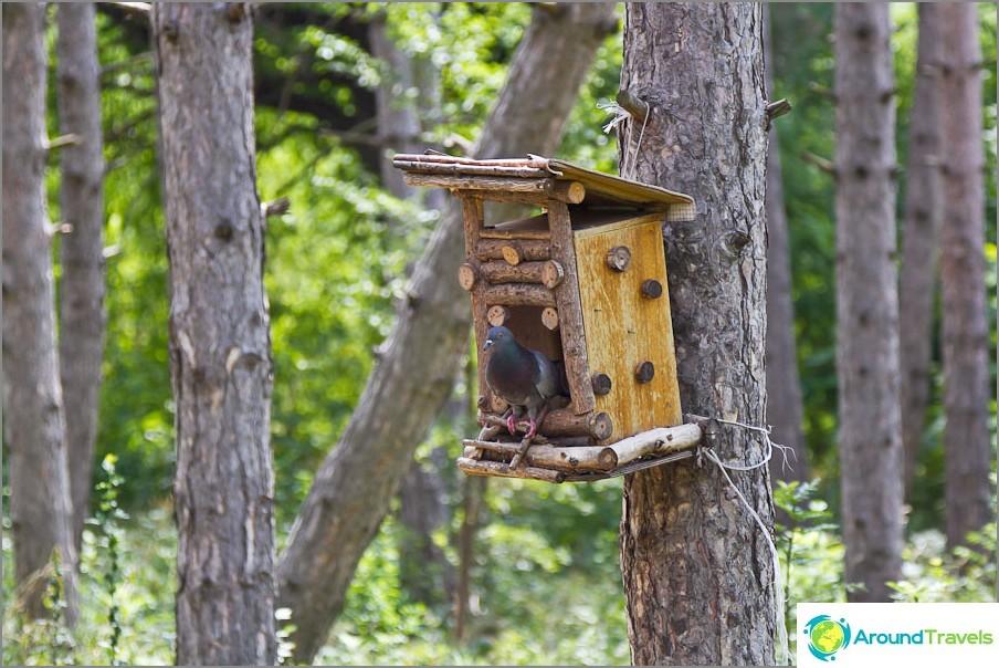Lintuhuoneet mäntymetsässä