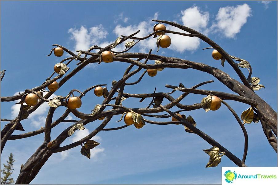 Kudotut puun oksat