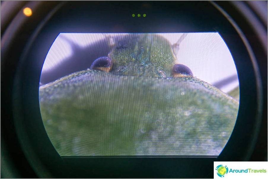 Какво се вижда чрез микроскоп