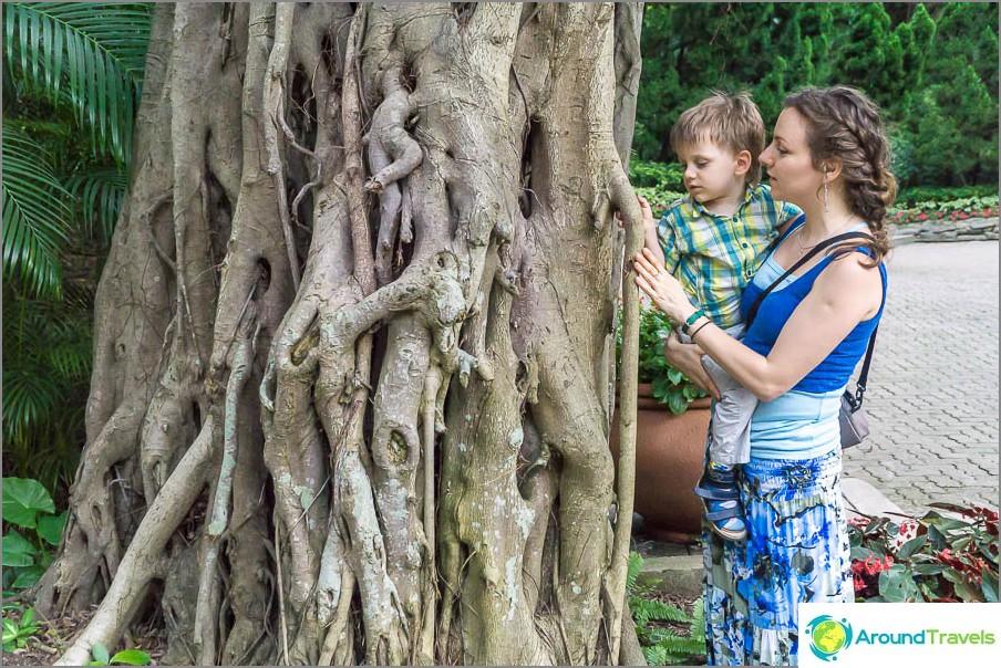 Egor ja minä tutkimme puuta