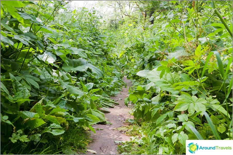 Polku viidakon läpi