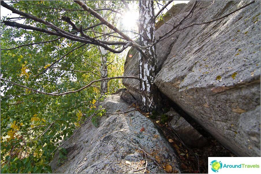 Tavoittaminen taivaalle katsomatta kiviä