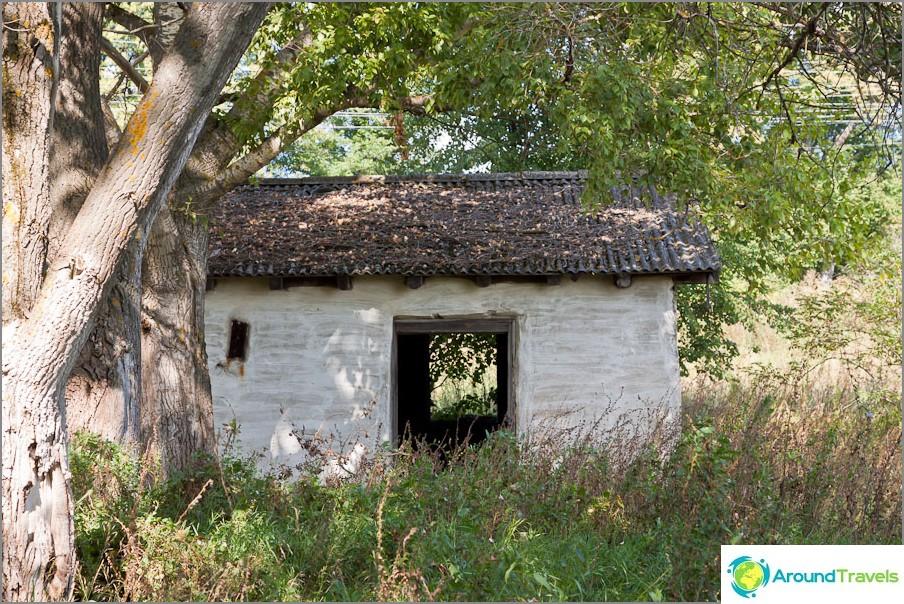 Talo puun varjossa lähellä
